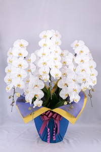 orchid_img004